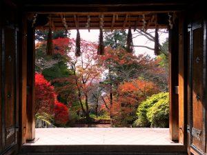 〜 絶景の紅葉を訪ねて 〜